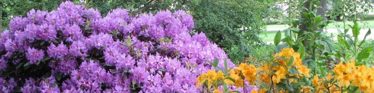 Planter til haven k b alle sorter haveplanter online her for Planter til koidam