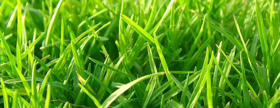 Ny græsplæne | Køb alt til pleje af græsplænen online her