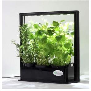 EcoHerbs vækstlys til krydderurter