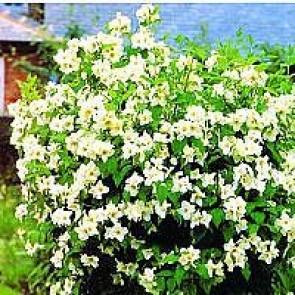 Blomster i højbede