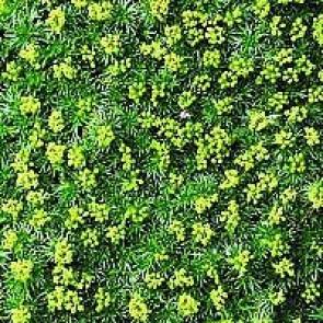 Turfline Mosfri græsfrø ½ kg - -