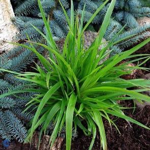 Krukkeplanter. Køb flotte planter til dine krukker online her