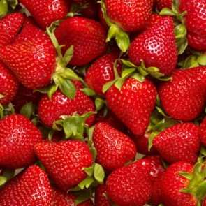 Jordbær  'Elsanta'- 6 stk. i plastbakke