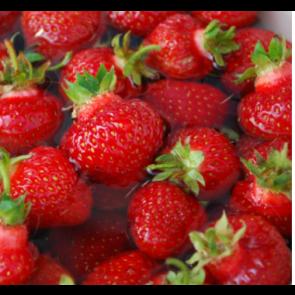 Jordbær 'Ostara'   Remonterende - 6 stk. i plastbakke