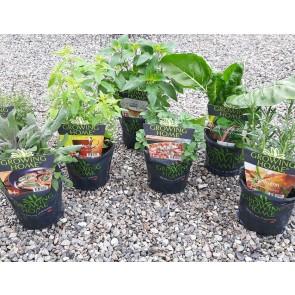 Tilbud 3 stk. Krydderurter i sorter - 2 liters potter fra Growing Home®