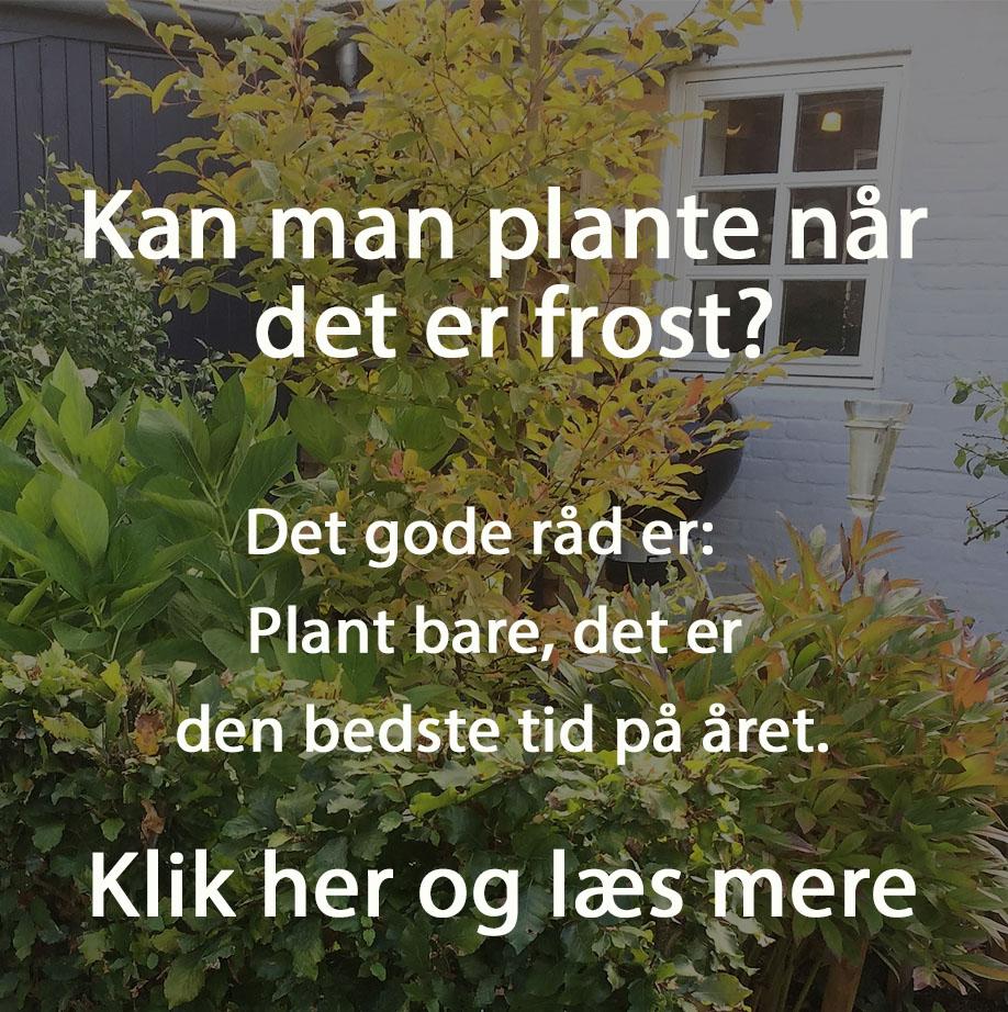 Plantning i frostvejr