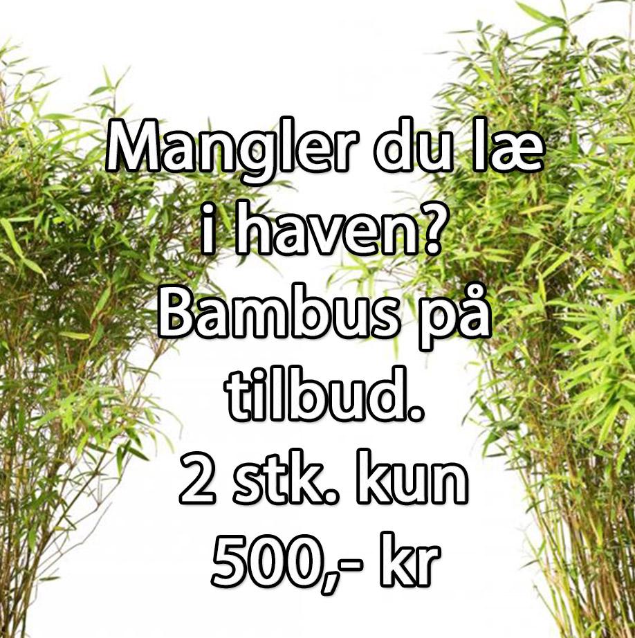 Bambus på tilbud