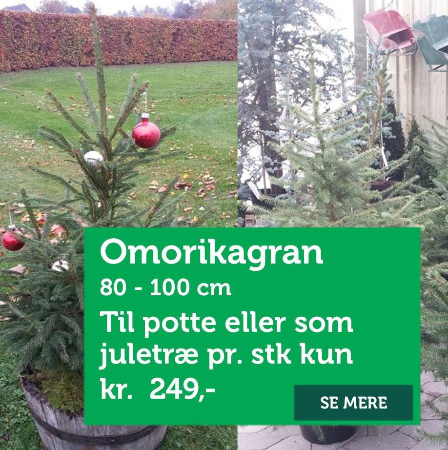 Omorika juletræ