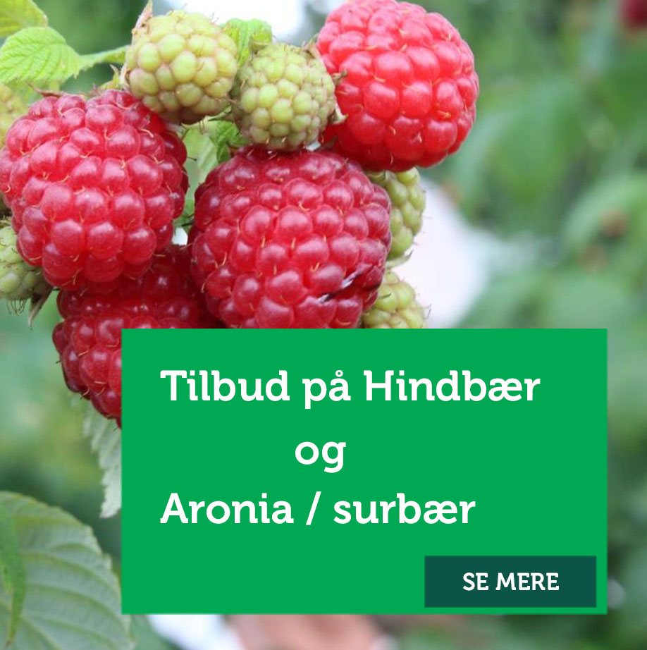 Tilbud hindbær og Aronia