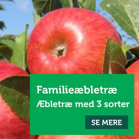 Familieæbletræ